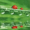 Ladybugs on tour